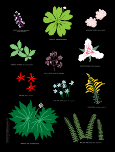 Native Plants of Georgia print by Atlanta based illustrator Sarah Neuburger