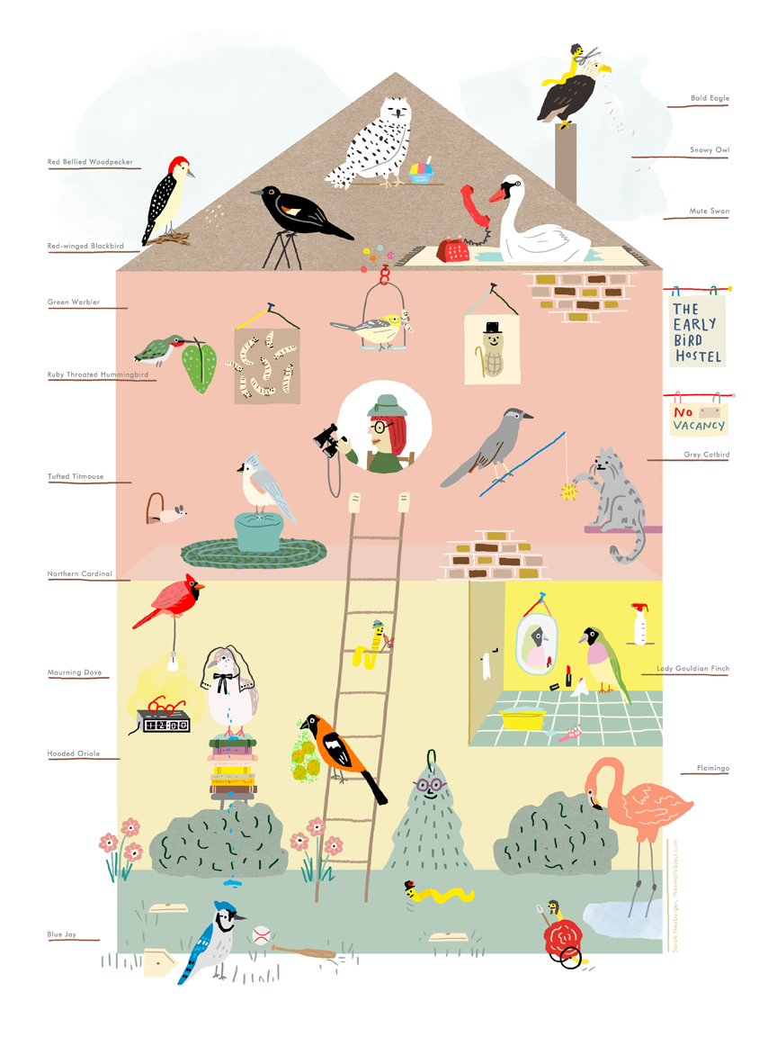 bird poster sarah neuburger atlanta illustrator backyard birds poster